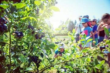 LFS Centennial Session | Growing the Future of Food and Farming at UBC Farm